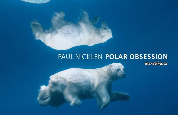 Полярная свобода (Polar Obsession) Арктики от фотоохотника NICKLEN Paul's
