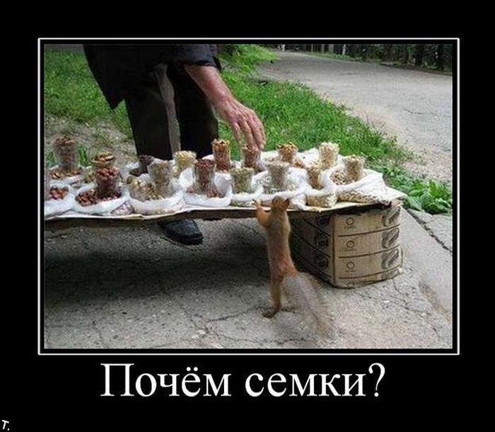 http://img1.liveinternet.ru/images/attach/c/1//53/791/53791650_1263494350_demotivatory_64.jpg