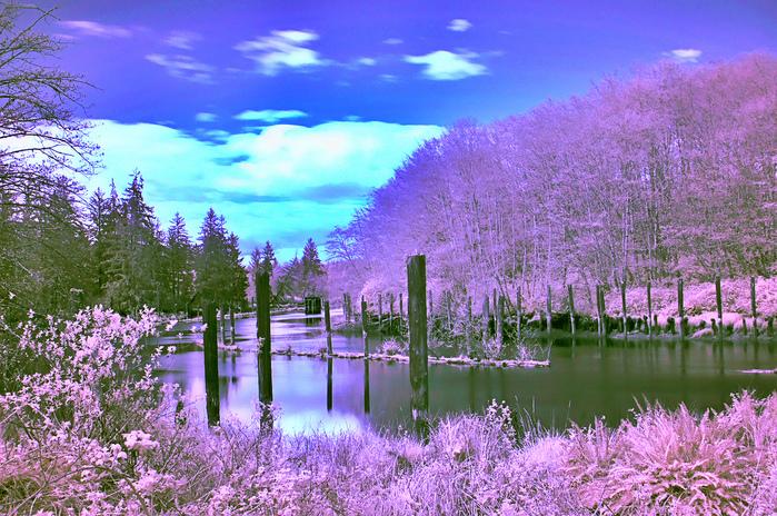 belles-images-de-la-nature