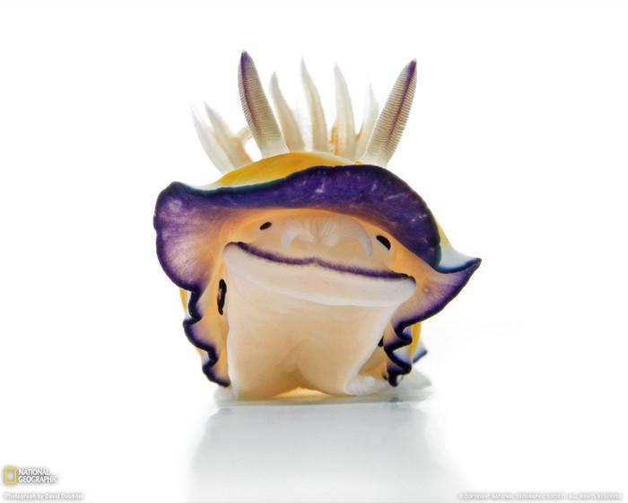 веселый моллюск