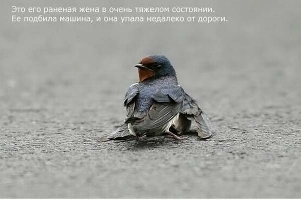 1264668518_strij_01 (600x400, 21 Kb)