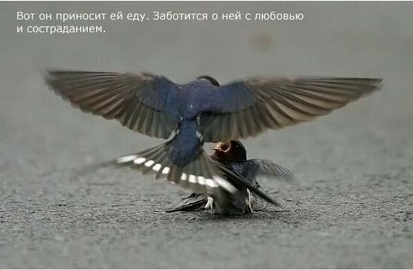 1264668534_strij_02 (600x393, 22 Kb)