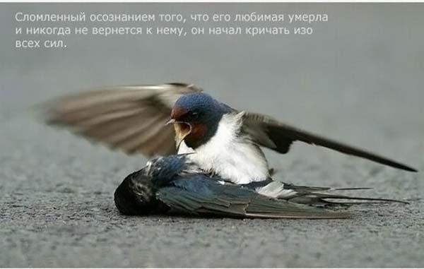 1264668564_strij_04 (600x381, 22 Kb)