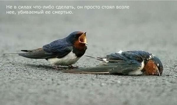 1264668576_strij_05 (600x358, 22 Kb)