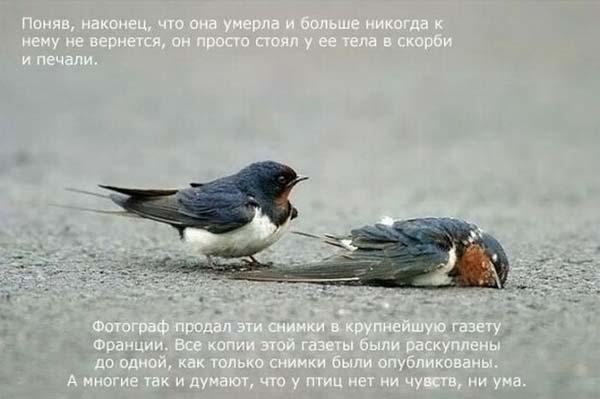 1264668586_strij_06 (600x399, 26 Kb)