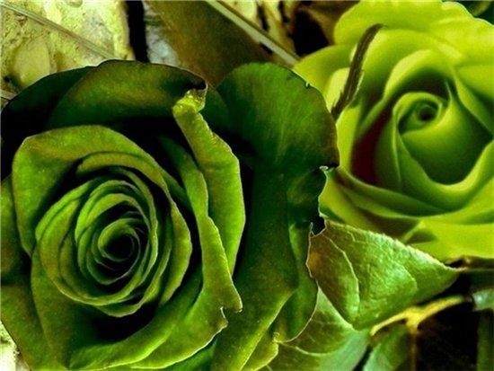 Картинки зеленые цветы