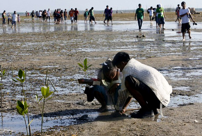 Массовые свадьбы с посадкой мангровых деревьев в Сан-Хосе, провинция Палаван, Филиппины, 14 февраля 2010 года.