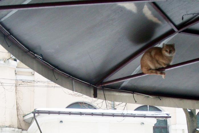 кот под крышей, кот прикол, смешной кот