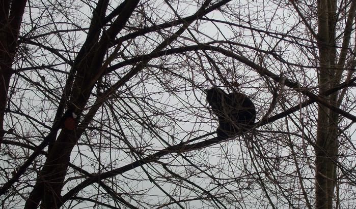 коты прилетели, кот на дереве