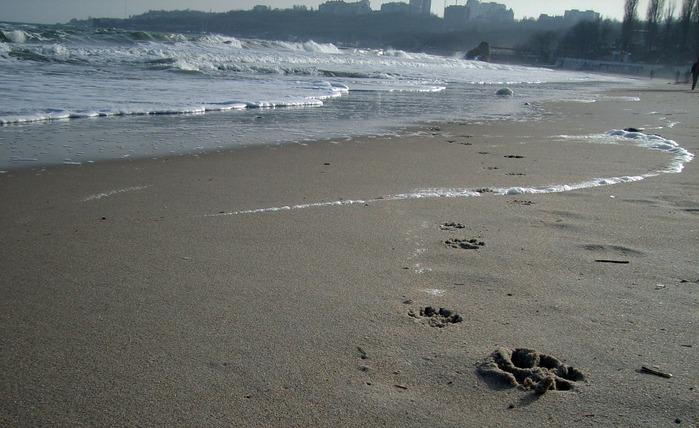 пляж, следы на песке, следы собаки