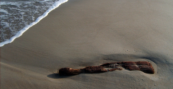 коряга в море