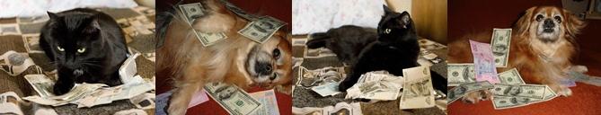 самые богатые животные