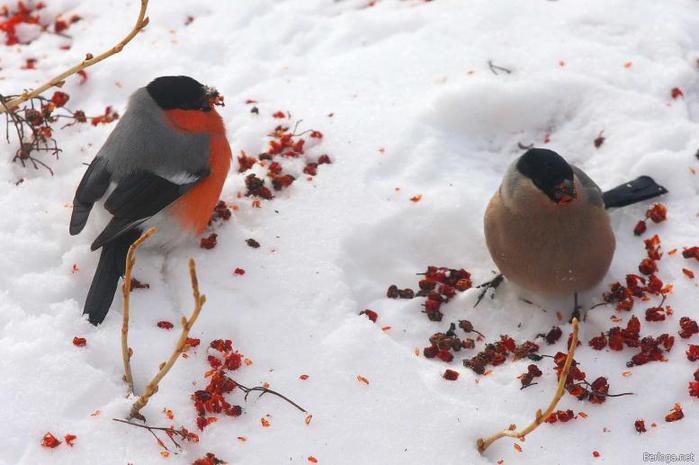 Тихо-тихо сидят на снегу