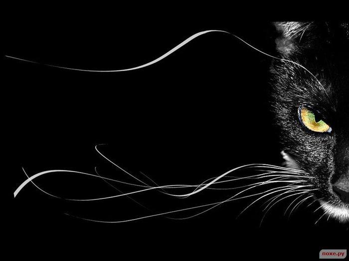 Чёрные кошки (700x525, 36Kb)...