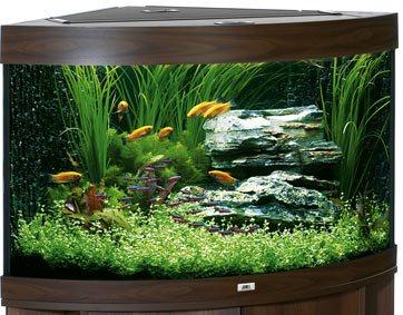 зообизнес - угловой аквариум