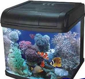 зообизнес - морской аквариум