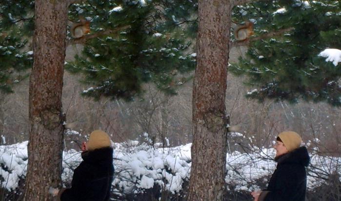 белочки, зима