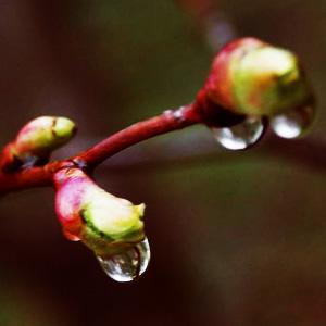 Весна идёт!!!