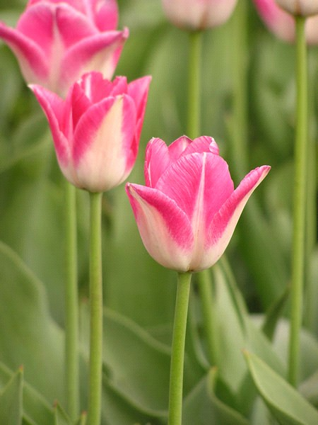 весна (450x600, 67 Kb)