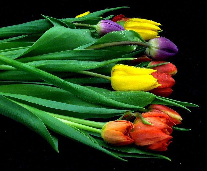 531c42eb Tulpen (700x579, 74 Kb)