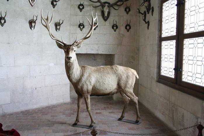 Замок Шамбор – королевский каприз 94364