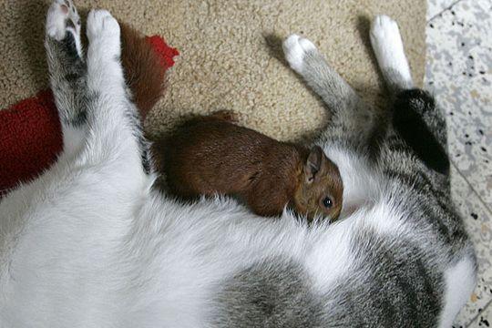кошка с котенком и белкой 2
