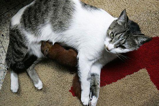 кошка с котенком и белкой 3