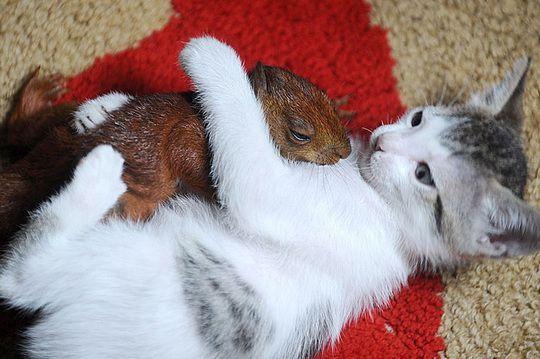 котенок с белкой
