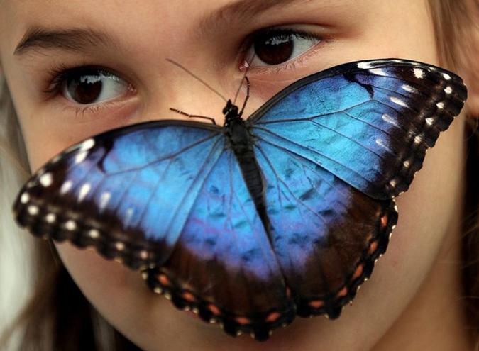 Выставка бабочек в музее естественной истории,  Лондон,  Англия,   31   марта 2010 года.