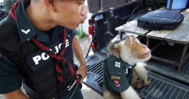 спецотдел полиции тайланда
