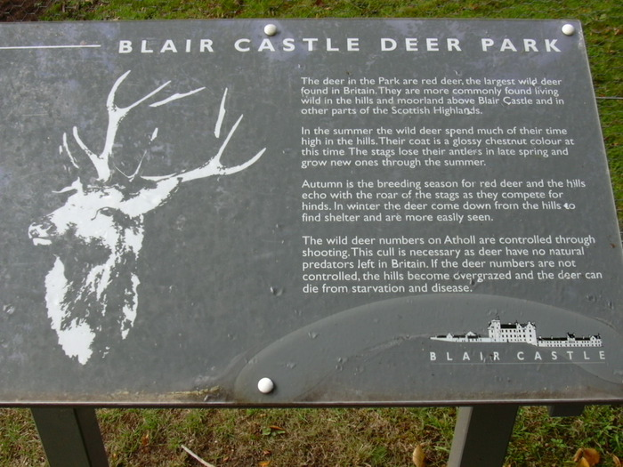 Шотландия - замок Блэр 89862