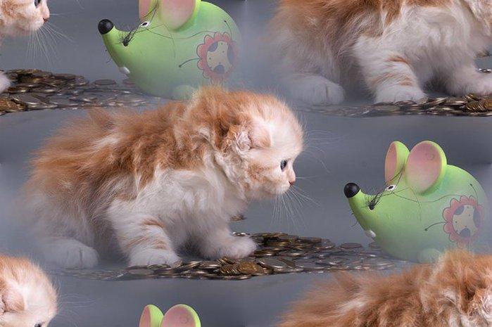кошачьи фоны
