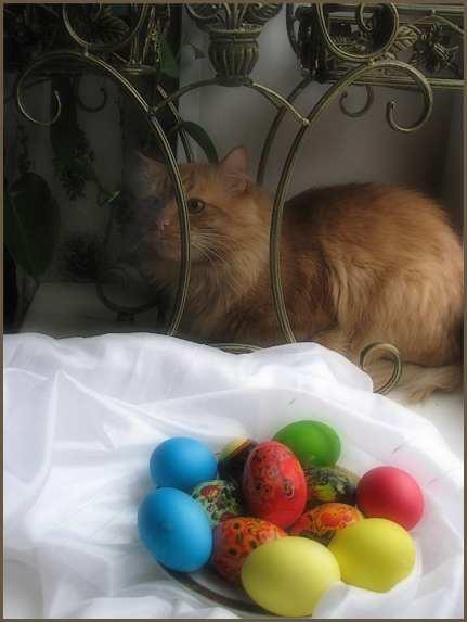 кот и яйца