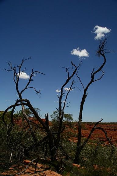 Королевский Каньон в Австралии 93784
