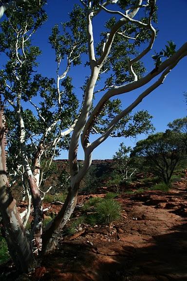 Королевский Каньон в Австралии 22274