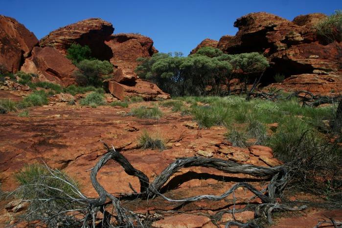 Королевский Каньон в Австралии 40007