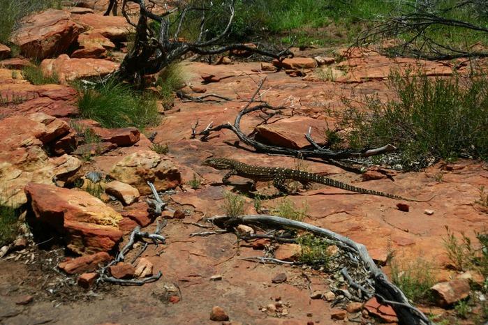 Королевский Каньон в Австралии 89679