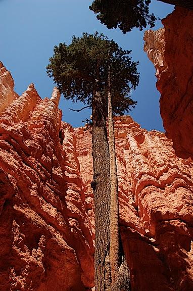 Национальный Парк Брайс Каньон (Bryce Canyon National Park, Utah) 37759