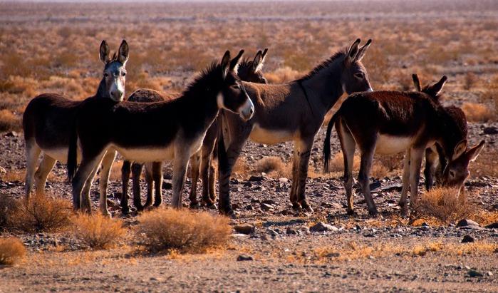 Национальный парк Долина Смерти | Death Valley National Park 32118