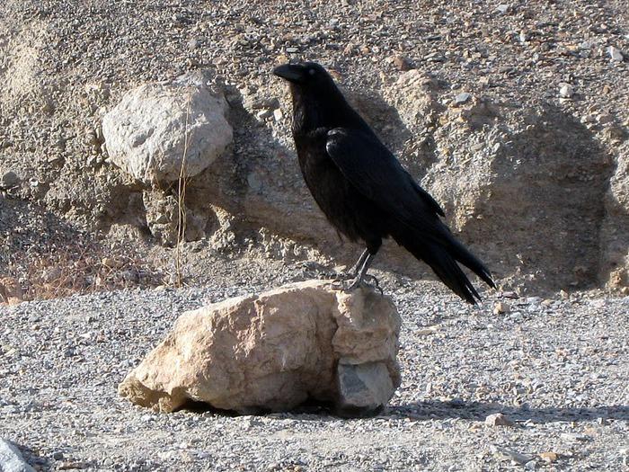 Национальный парк Долина Смерти | Death Valley National Park 54036