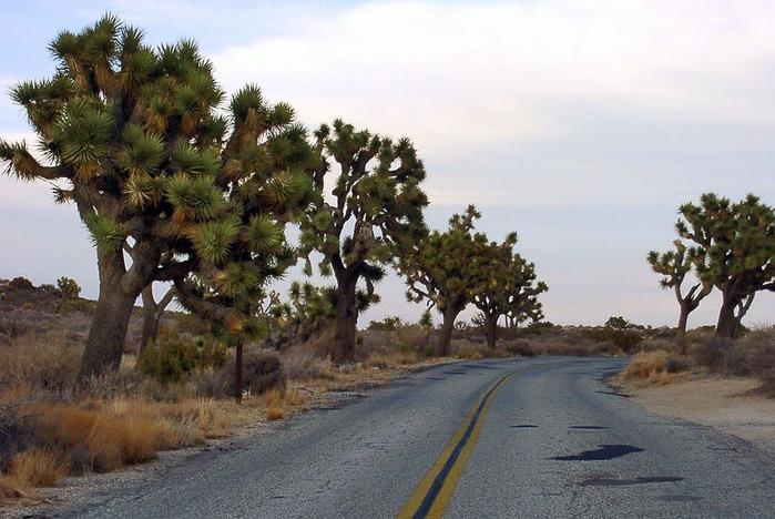 Национальный парк Долина Смерти | Death Valley National Park 35846