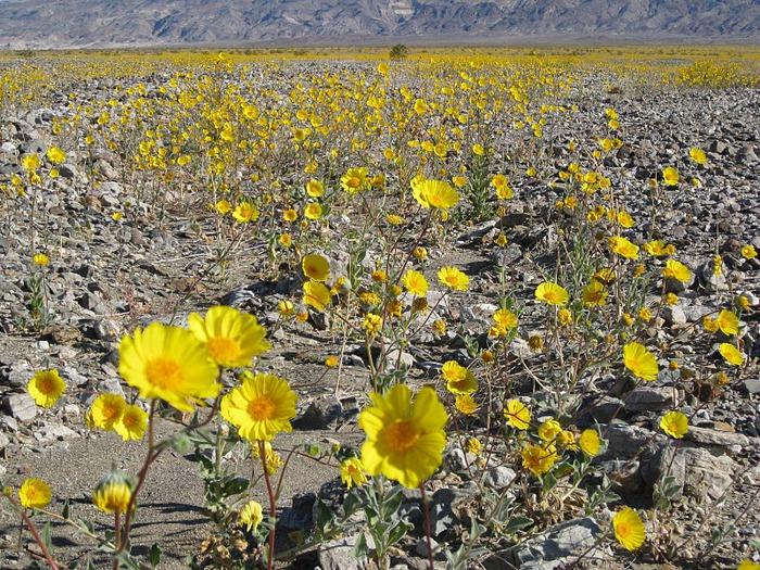 Национальный парк Долина Смерти | Death Valley National Park 63071