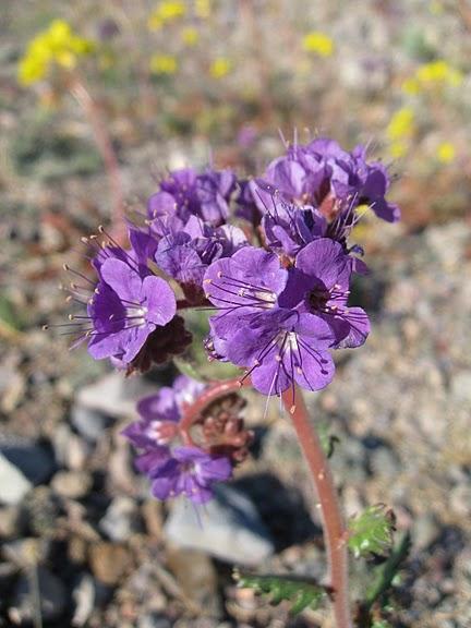 Национальный парк Долина Смерти | Death Valley National Park 81912