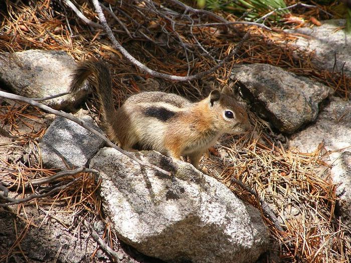 Национальный парк Rocky Mountain 87795
