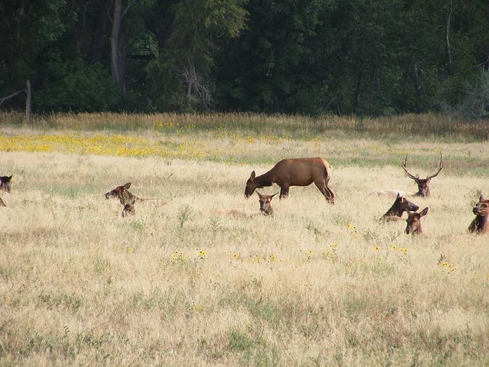 Национальный парк Rocky Mountain 54309
