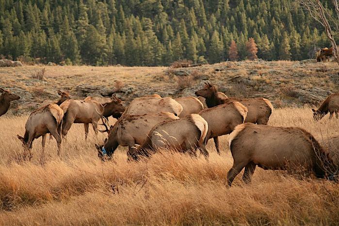Национальный парк Rocky Mountain 69151