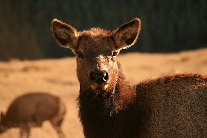 Национальный парк Rocky Mountain 17176