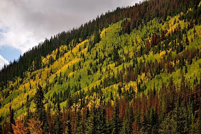 Национальный парк Rocky Mountain 54119