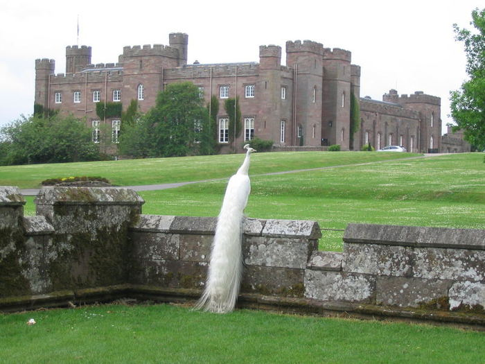 Замок Скоун (Scone Palace) 61652