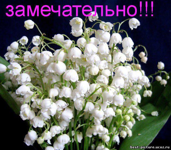 http://img1.liveinternet.ru/images/attach/c/1//57/761/57761343_Zamechatelno__landuyshi.jpg